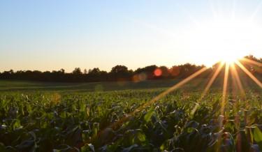 polje poljoprivreda